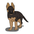 The German shepherd puppy on white background