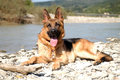 German shepherd sitting on the rocky shore of the river Stock Photo