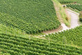 German vineyard Stock Photography