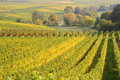German vineyard and trees in fall Royalty Free Stock Image