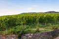 German wine fields landscape at summer Royalty Free Stock Photo