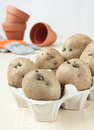 Germinate potatoes in the egg carton to plant Stock Photography