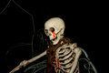 Ghost on halloween, Skeleton with neck chain Royalty Free Stock Photo