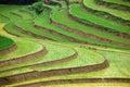 Giacimenti a terrazze del riso Fotografia Stock Libera da Diritti