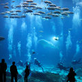 Giant Aquarium Royalty Free Stock Photo
