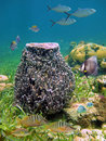 Giant barrel sponge Royalty Free Stock Photography