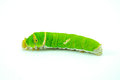 Giant green worm Royalty Free Stock Photo