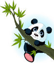 Giant panda climbing tree Royalty Free Stock Image