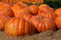 Giant Pumpkins Royalty Free Stock Images