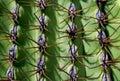 Giant Saguaro, Cactus Royalty Free Stock Photo