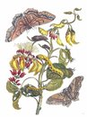 Giant Silk Moths and Purple Coraltree