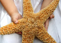 Giant starfish Royalty Free Stock Photo