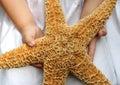Giant starfish Royalty Free Stock Photo