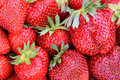 Giant strawberries with stems Royalty Free Stock Photo