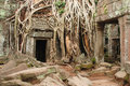 Giant tree roots growing over ta prohm temple angkor wat cambodia Royalty Free Stock Images