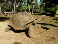 Giant turtles in vanille des mascareignes park south of mauritius island Stock Photography
