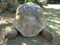 Giant turtles in vanille des mascareignes park south of mauritius island Stock Photo