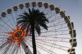 Giant wheel and palm tree Royalty Free Stock Photo