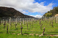 Gibbston valley winery on the south island of new zealand Royalty Free Stock Images