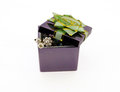 Gift Box With A Bow. Isolated ...