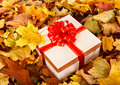 Gift box in fall foliage. Royalty Free Stock Photography
