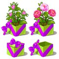 Gift green box with pink peonies. Vector flower