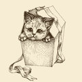 Gifting a cat illustration Royalty Free Stock Photo
