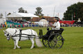 Gig and driver set newbury uk september horse follow a predetermined pattern around the arena as part of the driving competition Royalty Free Stock Images