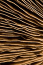 Gills of a mushroom Royalty Free Stock Photo