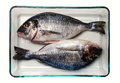 Gilt head bream fish healthy food two sea in a glass container on white background seen from overhead the sea Stock Images