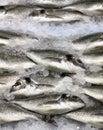 Gilt head fish on ice Royalty Free Stock Photo
