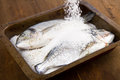 Gilt head sea bream baked in salt Stock Images