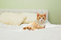 Ginger cat on bed Royalty Free Stock Photo