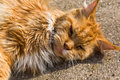 Ginger cat cute lying on the ground Royalty Free Stock Photos
