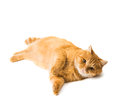 Ginger cat isolated on white background Stock Photo