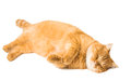 Ginger cat isolated on white background Royalty Free Stock Photos