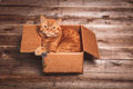 Ginger cat lies in box  on wooden background in a new apartment. Fluffy pet is doing to sleep there. Keys to new home Royalty Free Stock Photo