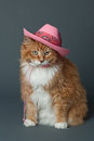 Ginger Cat in Pink Cowboy Hat Royalty Free Stock Photo