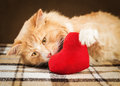 Ginger fluffy cat is playful touching soft toy heart Royalty Free Stock Photo