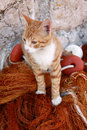 Ginger Kitten On Fishing Nets