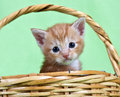 Ginger kitten sitting in a basket Royalty Free Stock Photo