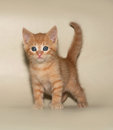 Ginger kitten standing on yellow background Stock Photography