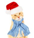 Ginger santa cat isolated on white background Royalty Free Stock Photos
