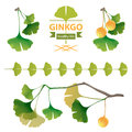 Ginkgo biloba bright design elements Royalty Free Stock Photography
