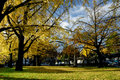 Ginkgo Park Royalty Free Stock Photos
