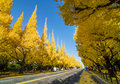 Ginkgo tree avenue the heading down to the meiji memorial picture gallery tokyo japan Stock Photos