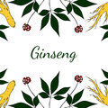 Ginseng, gorizontal background in color
