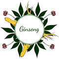 Ginseng, round frame in color 1