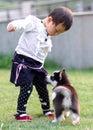 Gioco della ragazza con il cane Immagini Stock Libere da Diritti