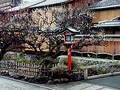 Gion lantern in spring Royalty Free Stock Photo